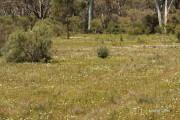 habitat, 29 September 2008