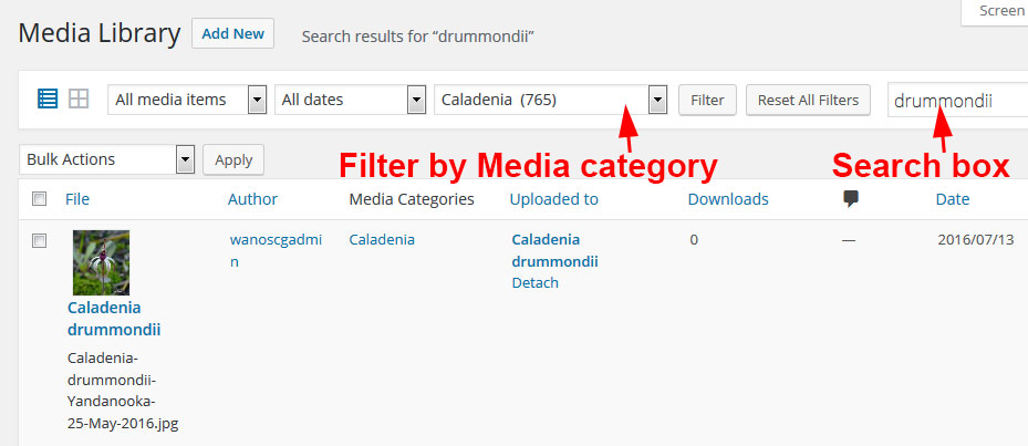 Media Library Search