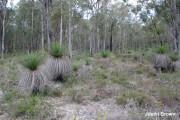 Perth Hills, 6 September 2007