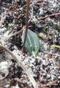 leaf Nine Mile Lake, 24 April 2012